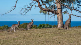 Rural / Farming commercial property for sale at Bawley Point NSW 2539