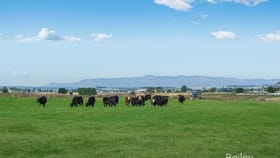Rural / Farming commercial property for sale at 16 Raworth Street Singleton NSW 2330
