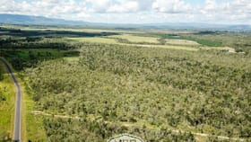 Rural / Farming commercial property for sale at 229 Shanty Creek Road Mareeba QLD 4880
