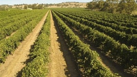 Rural / Farming commercial property for sale at 4 Vine Vale & 1024 Stockwell Road Vine Vale SA 5352
