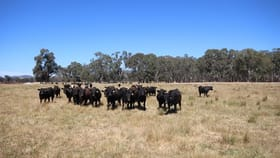Rural / Farming commercial property for sale at 200 Panes  Lane Wangaratta South VIC 3678