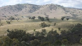 Rural / Farming commercial property for sale at 1931 The Bridle Track Bruinbun NSW 2795