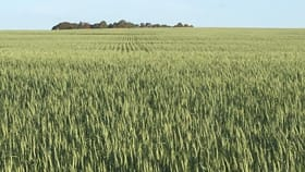 Rural / Farming commercial property for sale at Dalmoor Farm Moora WA 6510
