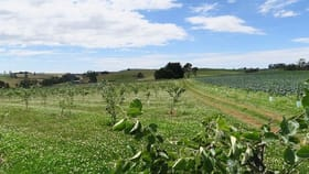 Rural / Farming commercial property for sale at 1200 Melrose Road Lower Barrington TAS 7306