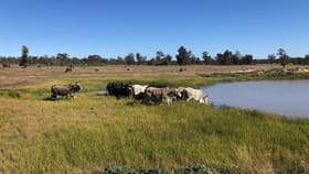 Rural / Farming commercial property for sale at Condobolin NSW 2877