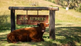Rural / Farming commercial property for sale at 24 Emersons Road Dorrigo NSW 2453