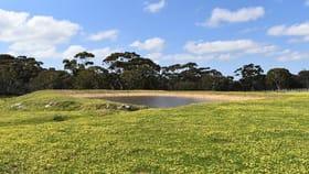 Rural / Farming commercial property for sale at Lot 6 Bark Hut Road Cassini SA 5223
