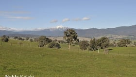 Rural / Farming commercial property for sale at 155 Coombs Lane Merrijig VIC 3723