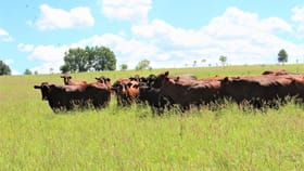 Rural / Farming commercial property sold at 0 Pokalong Roma QLD 4455