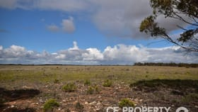 Rural / Farming commercial property for sale at Section 157 Strauss Road Cambrai SA 5353