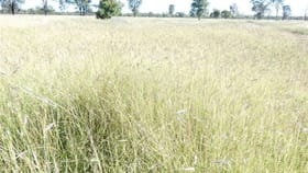Rural / Farming commercial property for sale at . Mornington Chinchilla QLD 4413