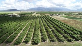 Rural / Farming commercial property for sale at Horseshoe Lagoon QLD 4809