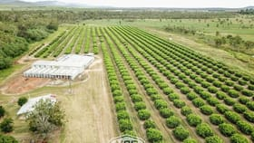 Rural / Farming commercial property for sale at 211 Bruce Weir Road Dimbulah QLD 4872