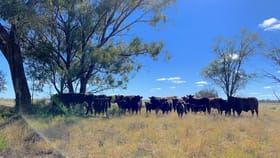 Rural / Farming commercial property for sale at Baradine NSW 2396