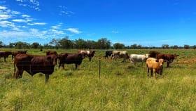 Rural / Farming commercial property for sale at * Croydon, Avondale & Part Springfield Tottenham NSW 2873