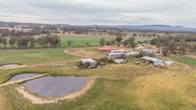 Rural / Farming commercial property for sale at 305 Blue Springs Road Gulgong NSW 2852