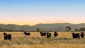 Rural / Farming commercial property for sale at Lot 11 De Beyer's Road Pokolbin NSW 2320