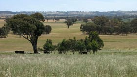Rural / Farming commercial property for sale at 125 Grounds Road Murringo NSW 2586