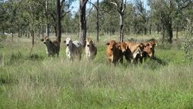 "Rural / Farming commercial property for sale at AUCTION ""IRONBARK 2"" - 405 ACRES Kaimkillenbun QLD 4406"