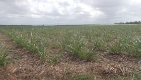 Rural / Farming commercial property for sale at 0 Cooks Lane Victoria Plantation QLD 4850