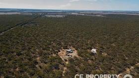 Rural / Farming commercial property for sale at 113/ Mallee Road Walker Flat SA 5238