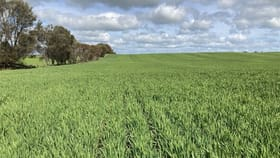 Rural / Farming commercial property for sale at 190 Bute Boundary Road Port Broughton SA 5522