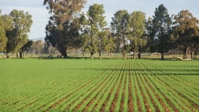 Rural / Farming commercial property for sale at 1251 Yabba South Road Yabba North VIC 3646