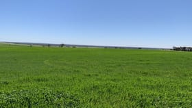 Rural / Farming commercial property for sale at 19943 Flinders Highway Talia SA 5670