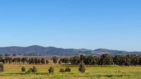 Rural / Farming commercial property for sale at 2391 Castlereagh Highway Gulgong NSW 2852