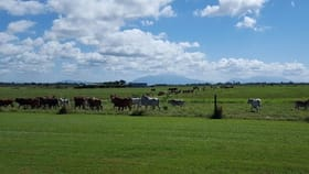 Rural / Farming commercial property for sale at 505 Mourilyan Harbour Road Mourilyan Harbour QLD 4858