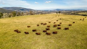 Rural / Farming commercial property for sale at Sunny View & Christmas Hill Tumbarumba NSW 2653