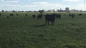 Rural / Farming commercial property for sale at - Watchem - Corack Road Watchem VIC 3482