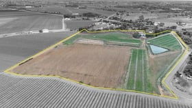 Rural / Farming commercial property for sale at 9214 Calder Highway Irymple VIC 3498
