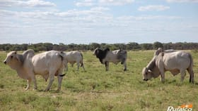Rural / Farming commercial property for sale at 0 Landsborough Hwy Mckinlay QLD 4823
