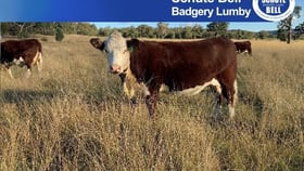Rural / Farming commercial property for sale at 260 Dilladerry Rd Tomingley NSW 2869