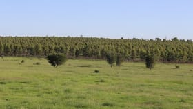 Rural / Farming commercial property sold at Lot 139 Old Rosevale Road Jandowae QLD 4410