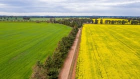 Rural / Farming commercial property for sale at 208 Roping Pole Road Ganmain NSW 2702