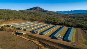 Rural / Farming commercial property for sale at Aratula Broiler Farm Aratula QLD 4309