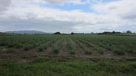 Rural / Farming commercial property for sale at 4 Hill Sixty Road, Jaffa El Arish QLD 4855