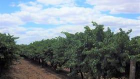 Rural / Farming commercial property for sale at 78 Clements Road Cobdogla SA 5346