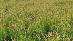 """Rural / Farming commercial property for sale at . """"East Lynne"""" Mitchell QLD 4465"""