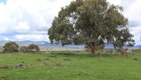 Rural / Farming commercial property for sale at 214 Tarban Road Tenterfield NSW 2372