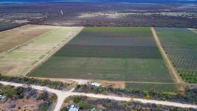 Rural / Farming commercial property for sale at 314 Costello Road Loveday SA 5345