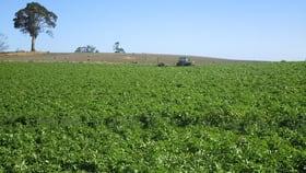 Rural / Farming commercial property for sale at 569 Clerke Plains Road Kindred TAS 7310