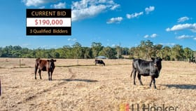 Rural / Farming commercial property for sale at Lot 10281 Pemberton-Northcliffe Road (Crowea) Northcliffe WA 6262