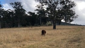 Rural / Farming commercial property for sale at 191 SHEEPSTATION CREEK ROAD Dorrigo NSW 2453