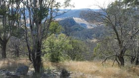 Rural / Farming commercial property for sale at Lot 24 Bluff Creek Road Tenterfield NSW 2372