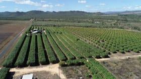 Rural / Farming commercial property for sale at 131 Bullaburrah Creek Rd Dimbulah QLD 4872