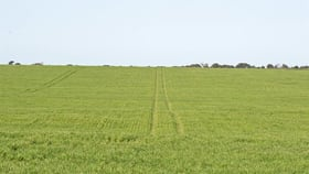 Rural / Farming commercial property for sale at Lot 51 Lime Kiln Road Minlaton SA 5575