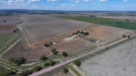 Rural / Farming commercial property for sale at 166 Collins Road Leeton NSW 2705